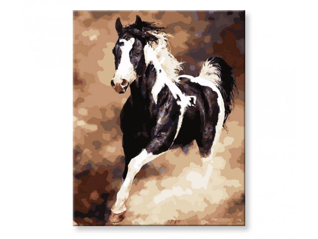Malování podle čísel - Černobílý kůň