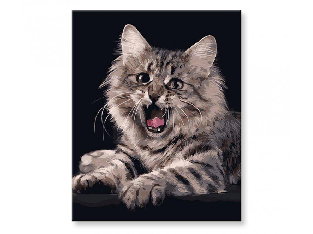 Malování podle čísel - Roztomilé kotě