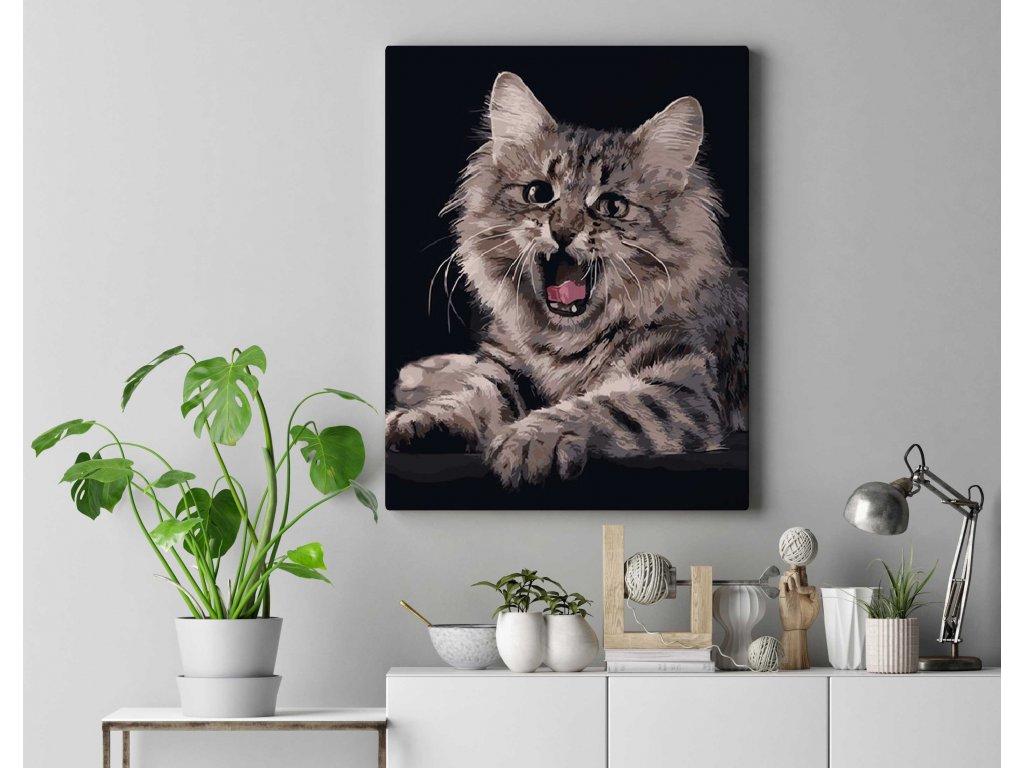 Roztomilé kotě DZ2491