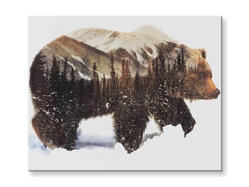 Malování podle čísel - Medvěd
