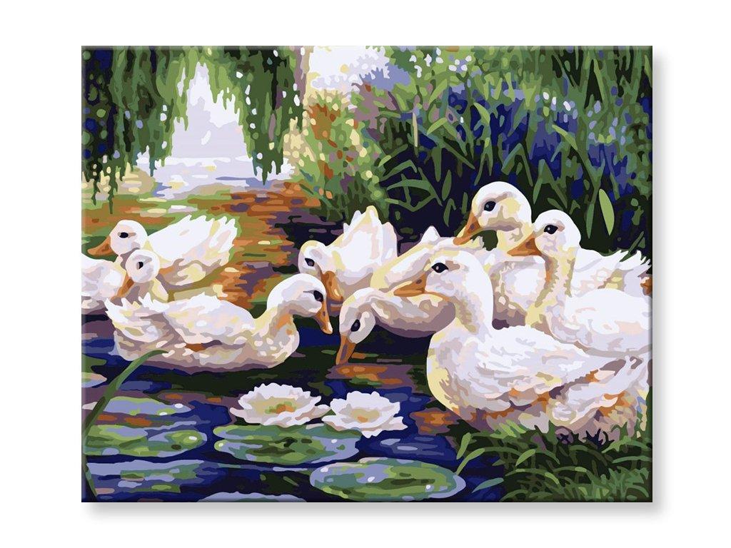 Malování podle čísel - Kačenky na jezeře