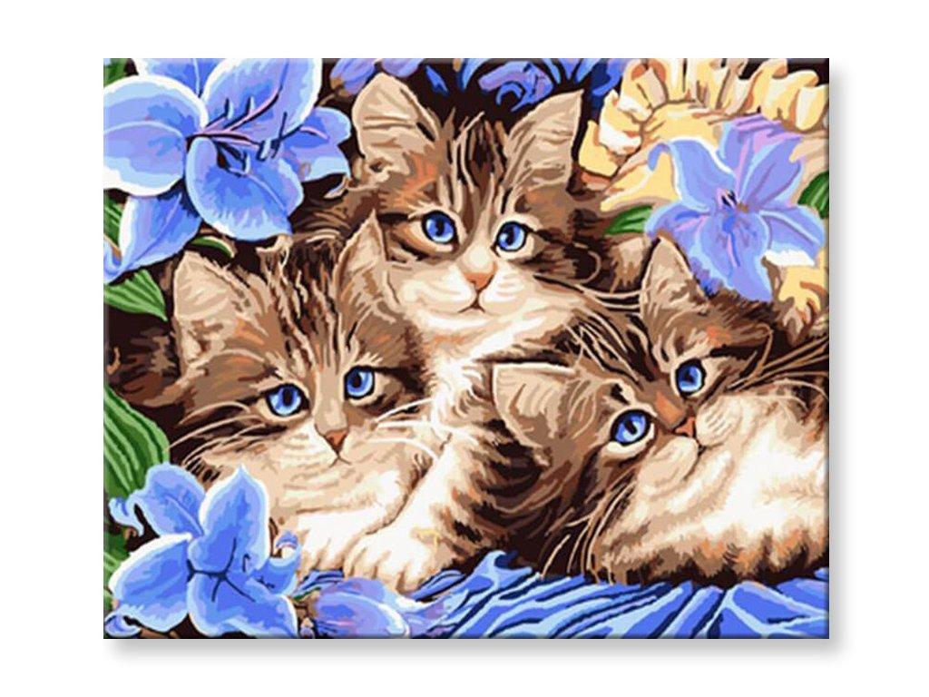 Malování podle čísel - Roztomilá koťátka