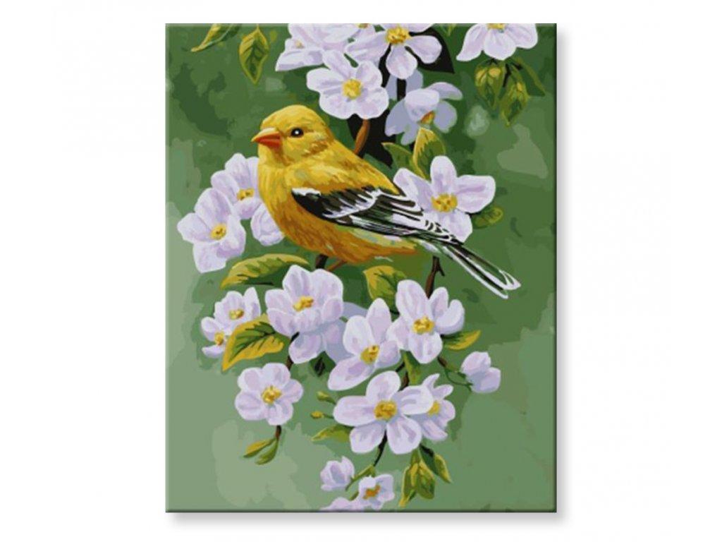 Malování podle čísel - Ptáček na rozkvetlém stormě