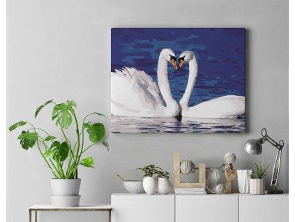 Malování podle čísel - Labutí láska