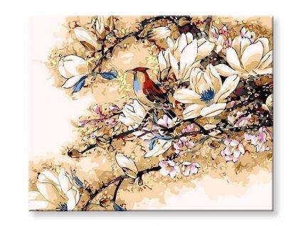 Ptáček vkvětech magnolie