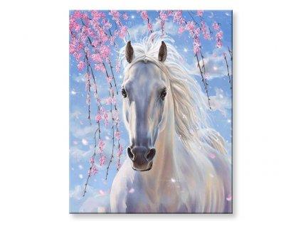 Malování podle čísel - Bílý kůň