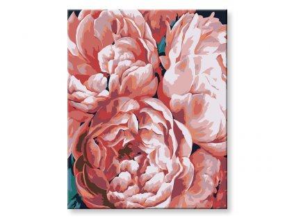 malovani-podle-cisel-rozkvetle-pivonky