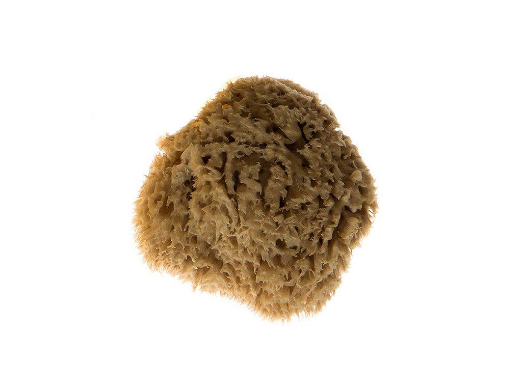 morska houba stredomorska kosmeticka