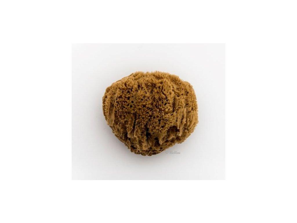 morska houba karibska mineralni 3