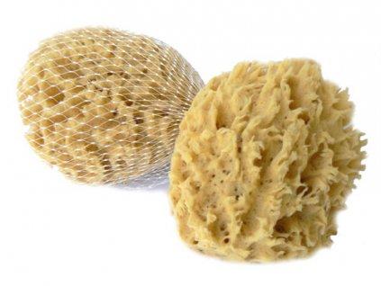 morska houba vlna
