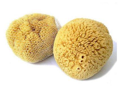 karibska morska houba
