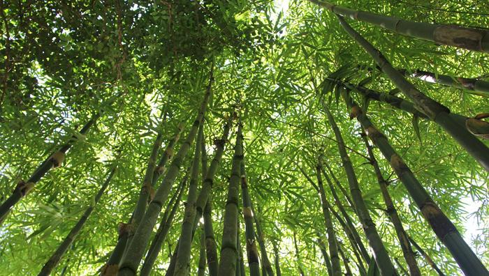 bambus-latkove-vlozky