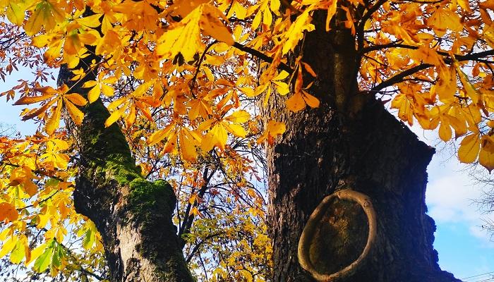 jesen-a-zdravie
