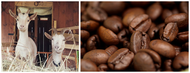 kava-kozi-pribeh