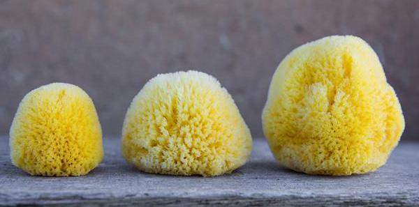 menstruacni-houby-intim