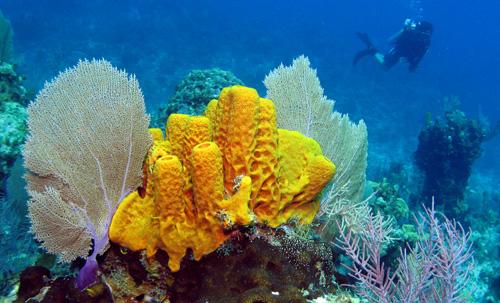 morske-huby-prirodne