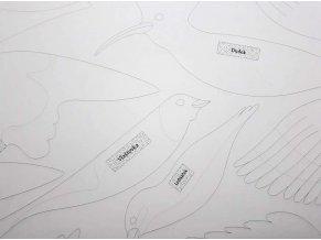 ptáci detail