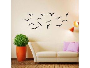 ptáci1