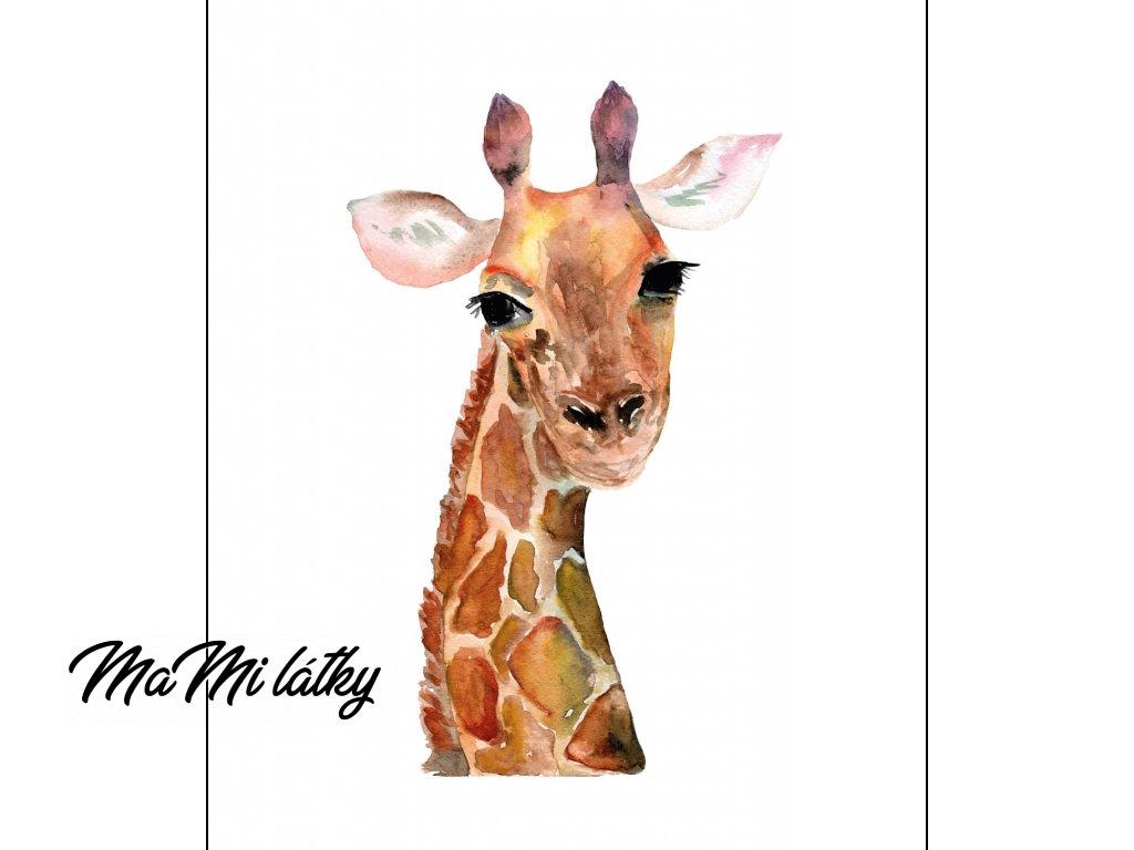 žirafa kreslená
