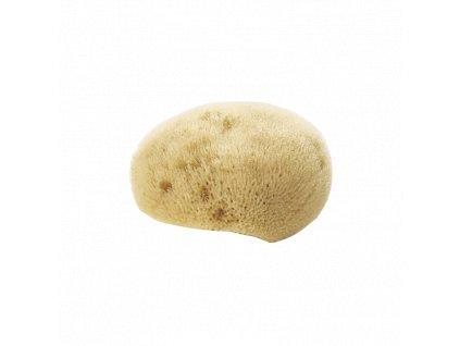 natural face sponge sea sponge.jpg