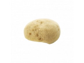 natural face sponge sea sponge.jpg