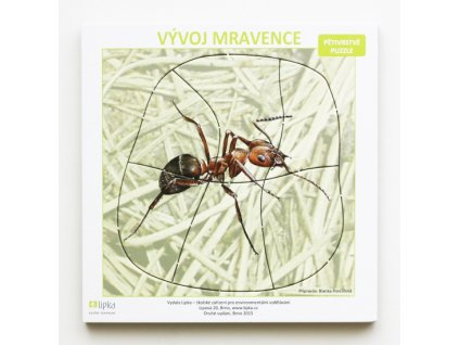 Vývoj mravence (vícevrstvé puzzle)