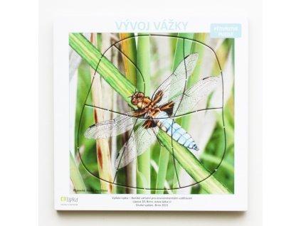 Vývoj vážky (vícevrstvé puzzle)