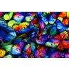 softshell zimni barevni motyli