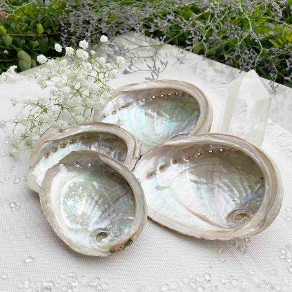 Abalone mušle (1)