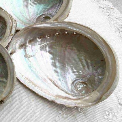 Abalone mušle (2)