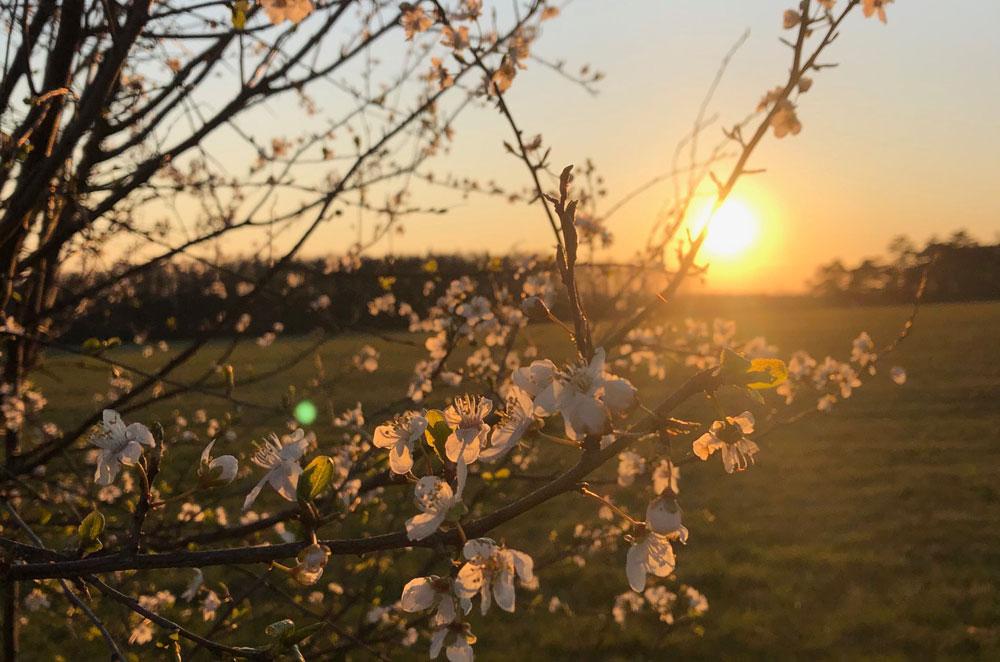 Jarní příležitosti