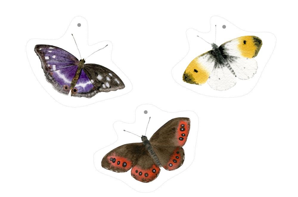 Motýli ke stažení