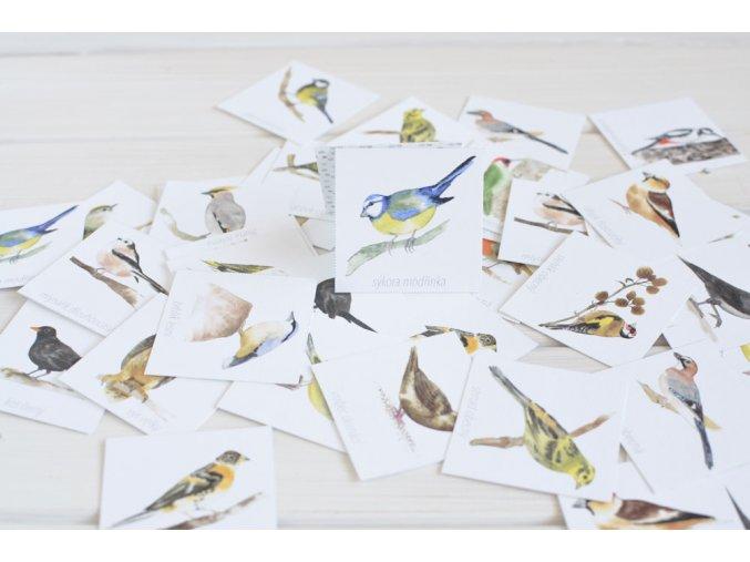 pexeso ptaci1