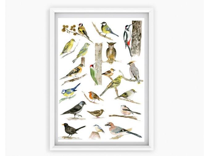 ptaci krmitka
