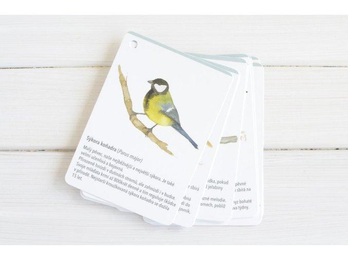 karticky ptaci2
