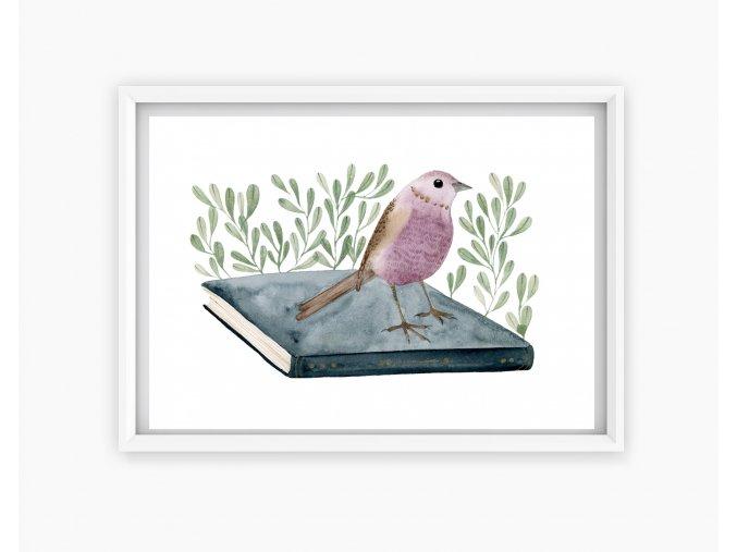 ptacek kniha