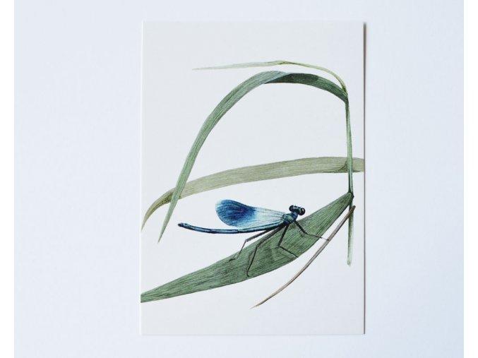 pohlednice motylice