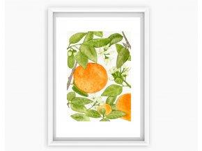 pomerance