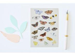 pohlednice motyli