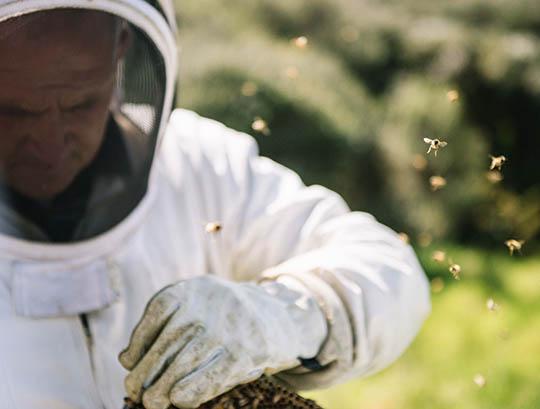 Včielky &  včelári