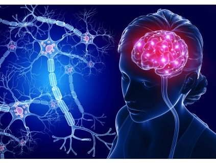 MCD14 BRAIN AND NERVE CELLS