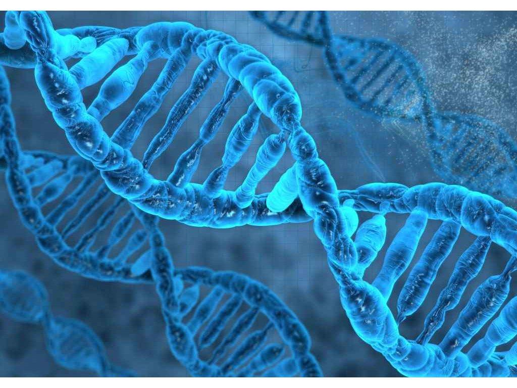 MCD08 DNA