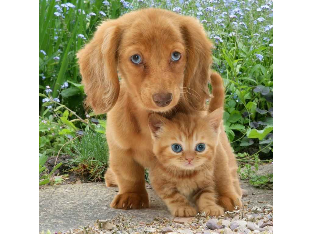 MCG26 CAT DOG