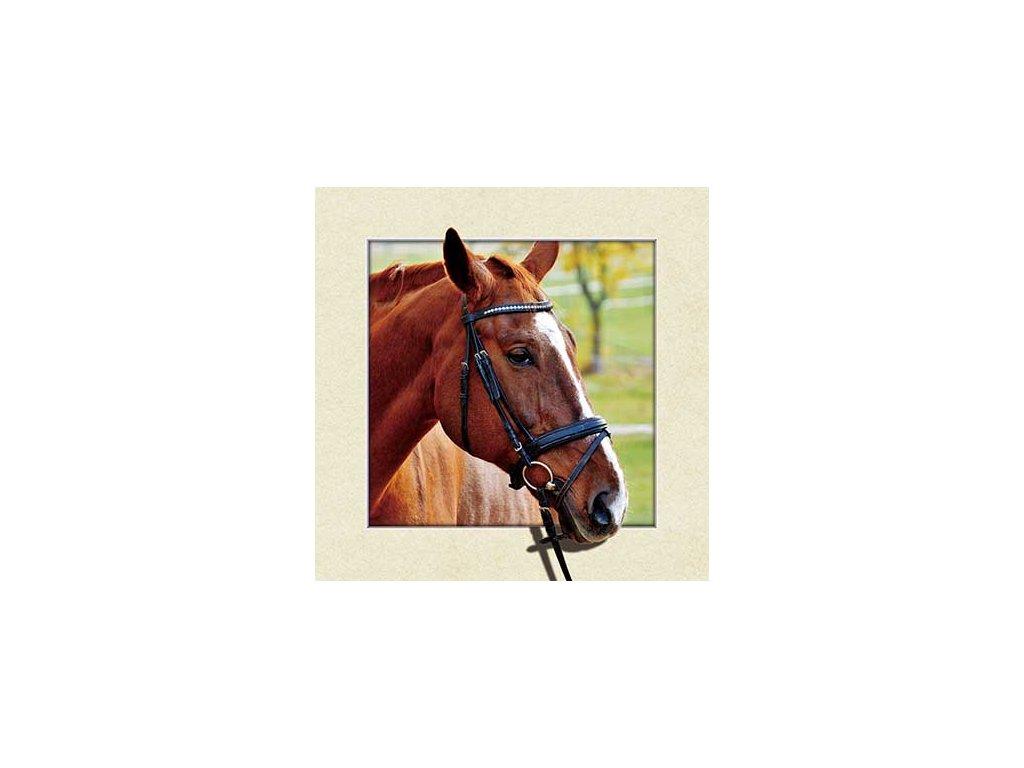 MC573 BROWN HORSE