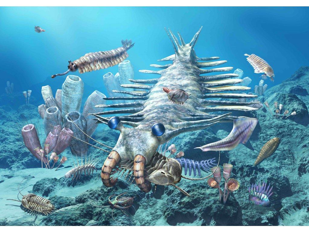 MCN30 CAMBRIAN SEA