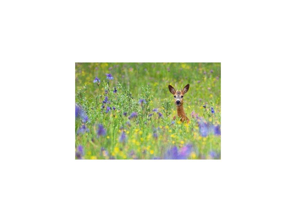 MCW04 Roe Deer