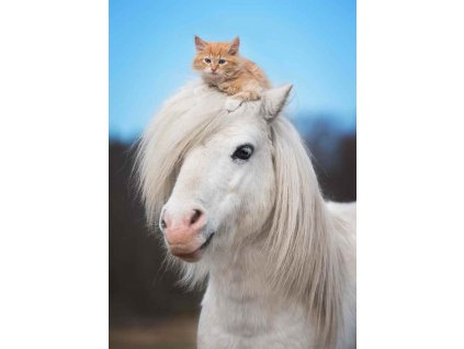 MPF21 PONY & KITTY