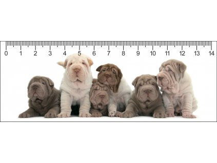 MC913 SHAR PEI PARTY 148x55 5 2018 web