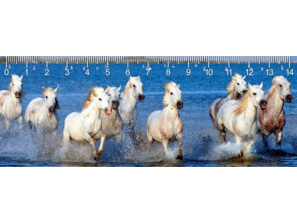 MC918 CAMARQUE HORSES