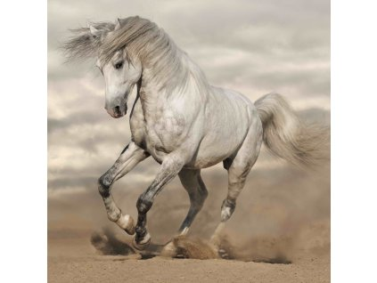 MCG41 HORSE